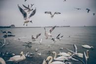 food-sea-flying-ocean.jpg